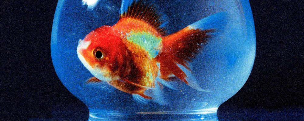 VINCE STAPLES EST COMME UN POISSON DANS L'EAU AVEC BIG FISH THEORY